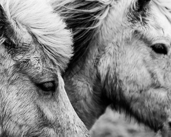 Sarah Jane Photography-Wild Horses
