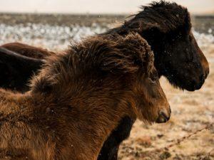 Sarah Jane Photography Wild Horses2